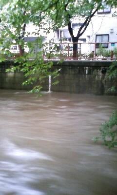 昨日の大雨の中で