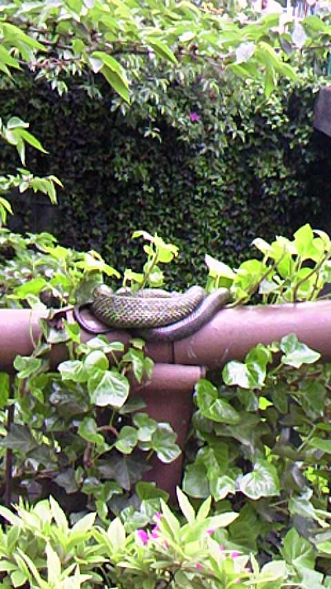 へび ヘビ 蛇